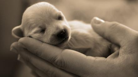 Animals baby dogs hands monochrome wallpaper