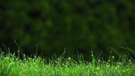 Dew grass nature plants Wallpaper