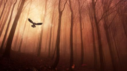 Forests birds fantasy art owls artwork gloomy wallpaper
