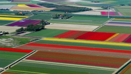 Landscapes trees flowers houses fields tulips holland wallpaper