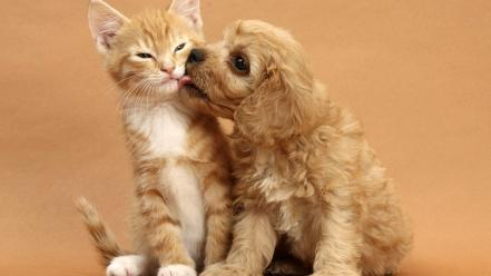 Cats animals dogs kissing brown wallpaper