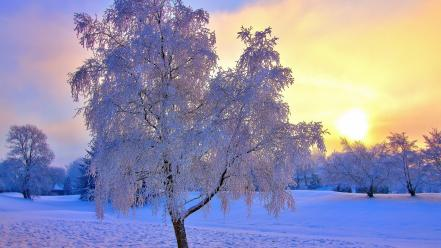 Landscapes nature winter snow sun trees wallpaper