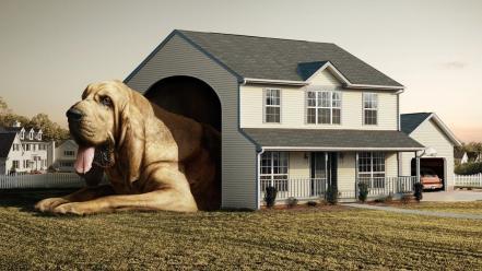 Dog House Wallpaper