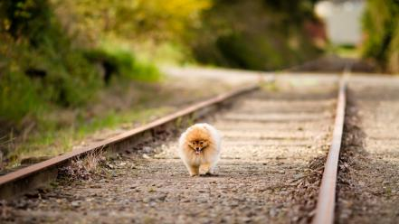 Dogs path railroad tracks depth of field wallpaper