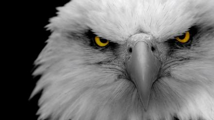 Eagle eyes background Wallpaper