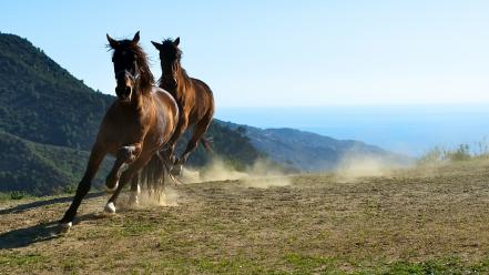Animals horses steppe wallpaper