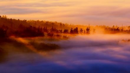 Landscapes nature forests fog sea dawning Wallpaper