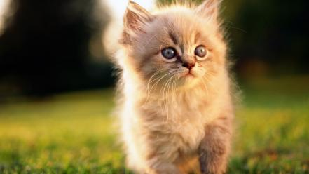 Little cute kitten Wallpaper