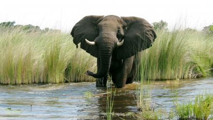 Nature animals elephants rivers wallpaper
