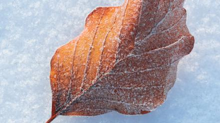 Nature snow leaves macro wallpaper