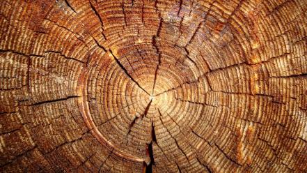 Wood textures tree trunk wallpaper