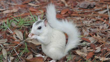 Nature white animals outdoors squirrels wallpaper
