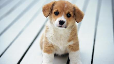 Animals baby dogs puppies Wallpaper
