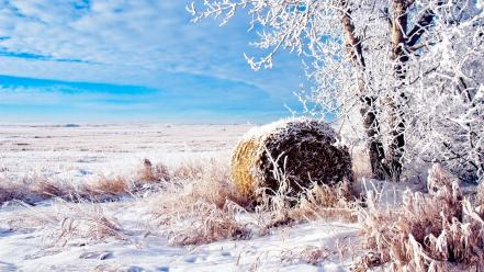 Fields landscapes natural scenery nature snow wallpaper