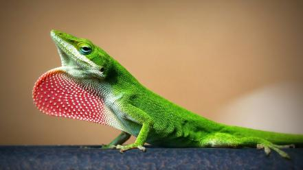 Green nature animals lizards dots reptiles Wallpaper