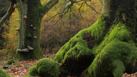 Trees forests moss wallpaper