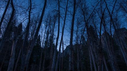 Trees night moon crescent wallpaper