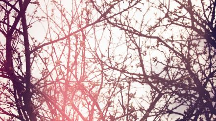 Trees sunlight flora branches wallpaper