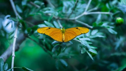 Insects macro butterflies wallpaper