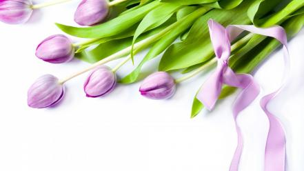 Flowers ribbons tulips wallpaper