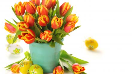 Flowers tulips holidays wallpaper
