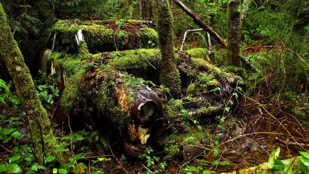 Forest cars old car wallpaper