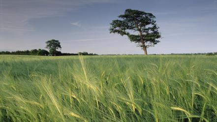 North united kingdom barley wallpaper