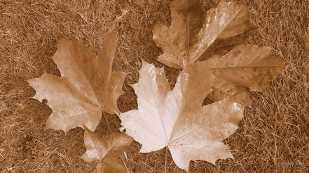 Autumn leaves sepia wallpaper