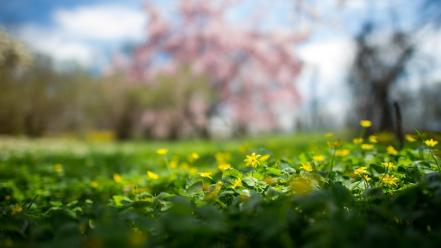 Flowers depth of field yellow wildflowers wallpaper