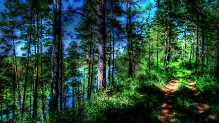 Landscapes nature trees trail riverside wallpaper