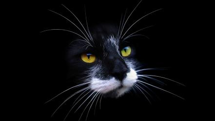 Cats animals black background muzzle Wallpaper