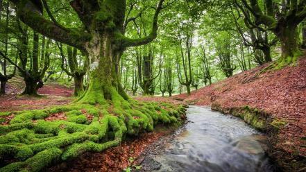 Landscapes trees europe spain forest biskaya wallpaper