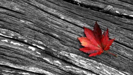 Leaves selective coloring Wallpaper