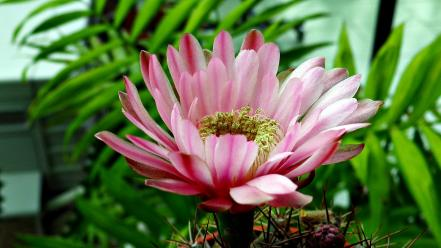 Nature flowers pink plants wallpaper