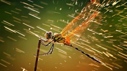 Rain insects water drops macro dragonflies wallpaper
