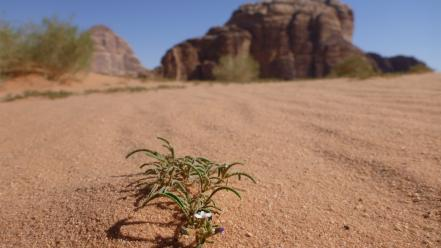 Flowers desert jordan plants skies wadi rum wallpaper
