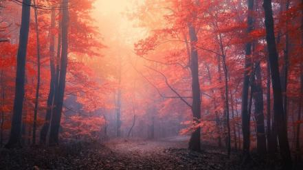 Landscapes nature forests paths mystical dawning wallpaper