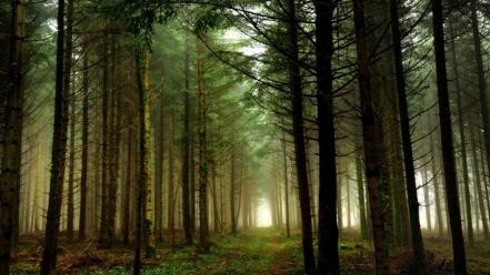 Landscapes nature trees forests paths mystical dawning Wallpaper