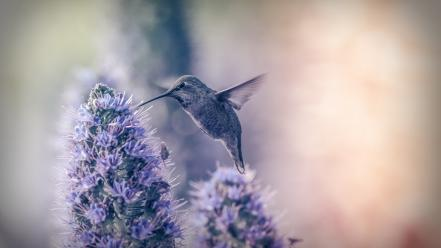 Nature flowers birds hummingbirds Wallpaper
