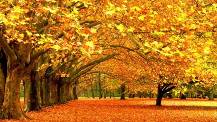 Autumn fall background wallpaper