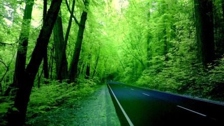 Forests green nature roads wallpaper