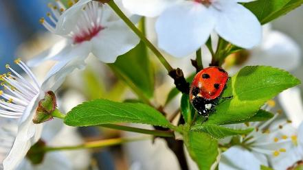 Nature insects macro ladybirds wallpaper
