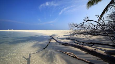 Coast tropical maldives palm trees sea beach wallpaper