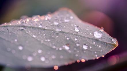 Depth of field blurred focused rain drops wallpaper
