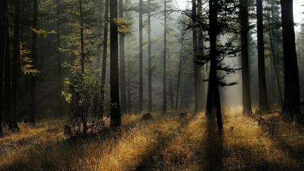 Forests grass light rays mystical early morning Wallpaper
