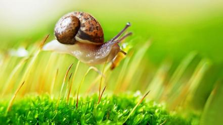Snail on plants wallpaper