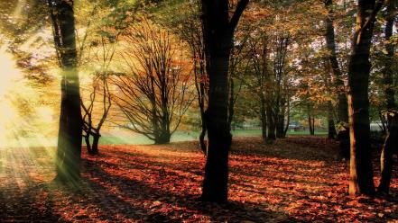 Sun rays park autumn leaves early morning wallpaper
