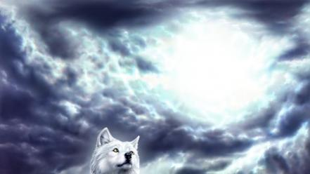Animals clouds flying spirit sunlight wallpaper