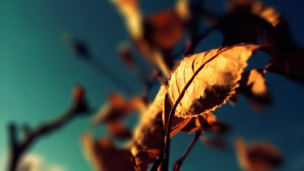 Autumn leaves photography wallpaper
