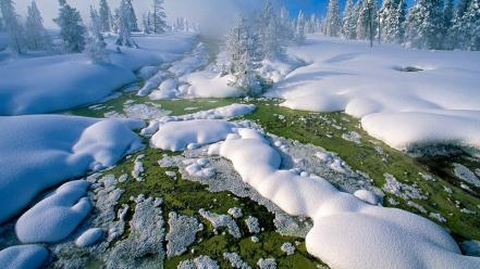 Nature winter snow trees national geographic wallpaper